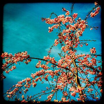 Sakura by masarukishino