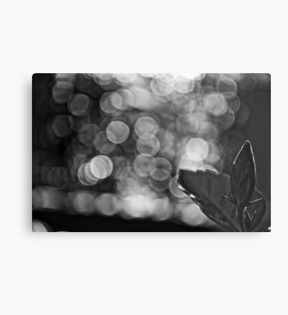 When B&W is Bokeh...: On Featured work: The-women-photographer Group Metal Print