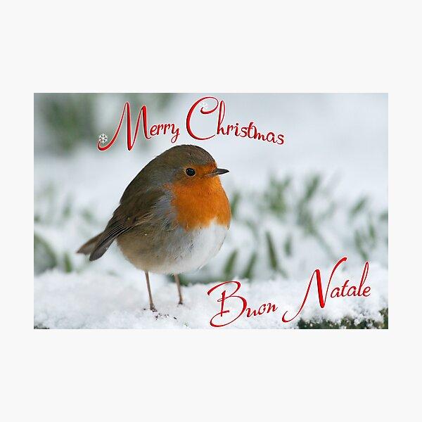 Robin, Merry Christmas, Pettirosso, Buon Natale Photographic Print