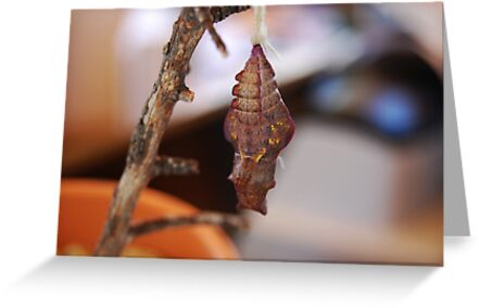 Cocoon by Ronald Hannah