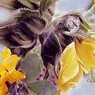 Sunflower Dream by Ruth Palmer