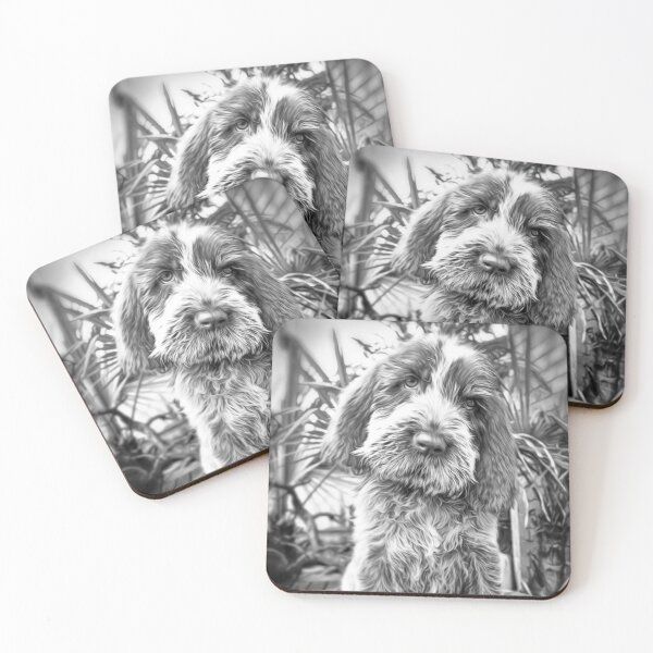 Sitting puppy Spinone Coasters (Set of 4)