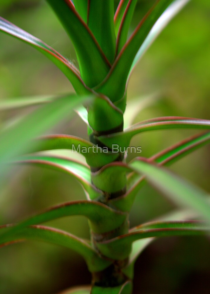 Tropical close up by MarthaBurns