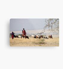 Maasai (or Masai) Herders with Cattle, Tanzania  Metal Print