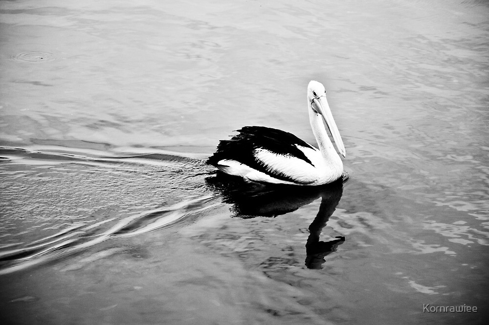 I am in black and white... by Kornrawiee