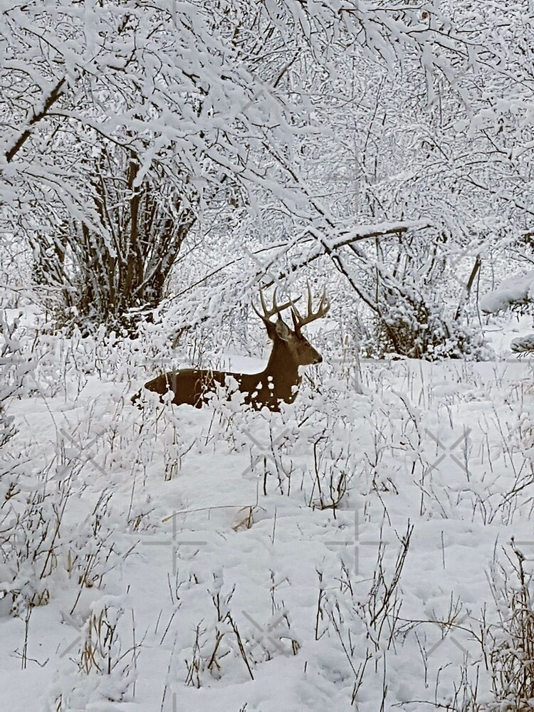 Deer in the Snowy Forest by EmilyBickell