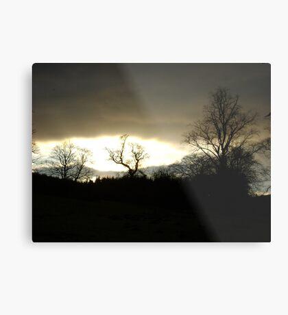 Eye of Trees (sunset, Falkland) Metal Print