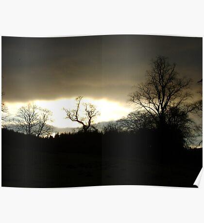 Eye of Trees (sunset, Falkland) Poster