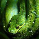 Green Tree Snake by Liza Yorkston