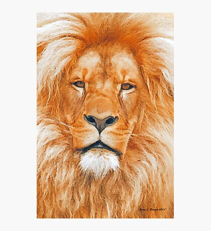 Old Lion Photographic Print