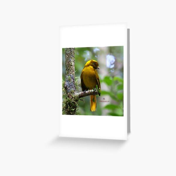 Golden Bowerbird  Greeting Card