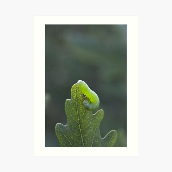 Green caterpillar Art Print