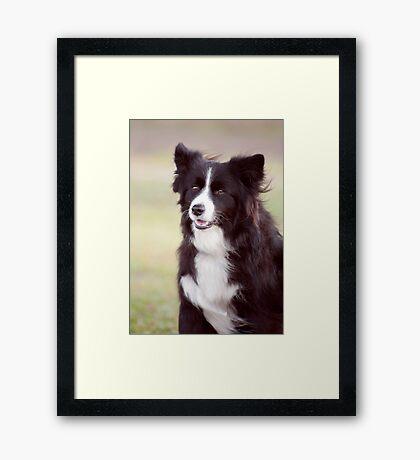 Smiley Face - border collie Framed Print