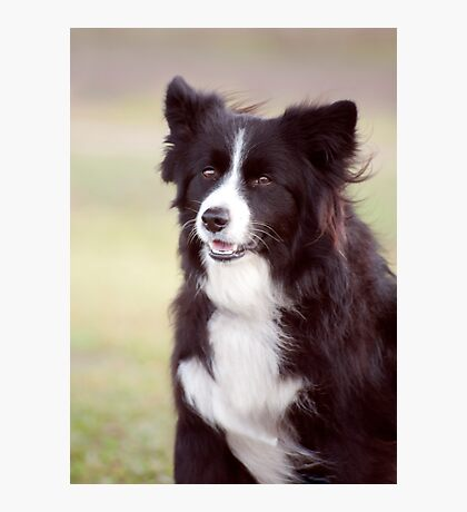 Smiley Face - border collie Photographic Print