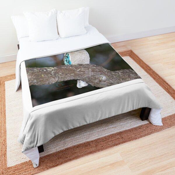 Blue-winged Kookaburra  Comforter