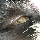 The eye of the cat by Jess Collett