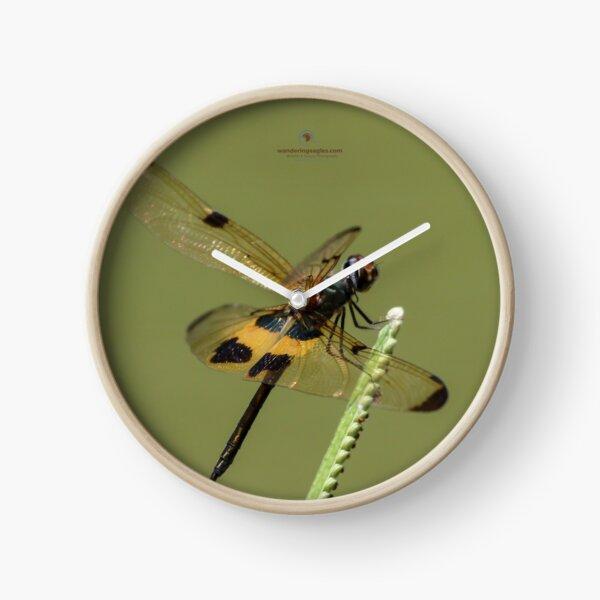Yellow-striped Flutterer Clock