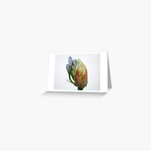 The flower of Agapanthus is going to come out Greeting Card