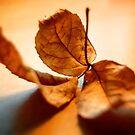 Veiny Leaf by Melissa Fuller