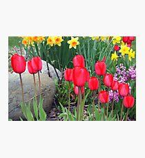 Springtime Garden Photographic Print