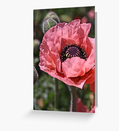 Pink poppy Greeting Card