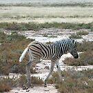 Zebra – crossing by Rina Greeff