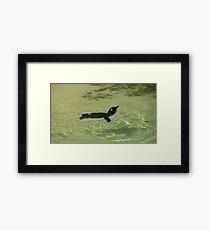 Fairy Penguin Swimming Framed Print