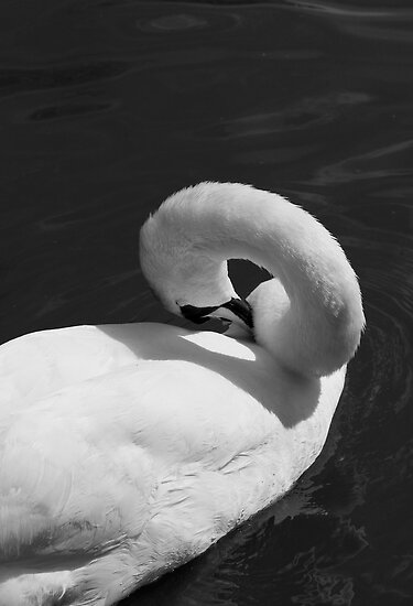 At Ease by Melanie Simmonds