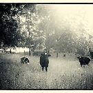 Three Cows by Michael  Dreese