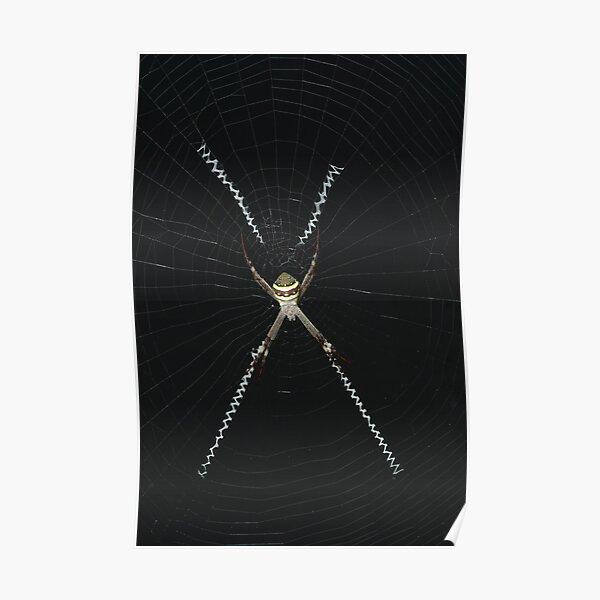St. Andrew's Cross Spider - Argiope keyserlingi Poster