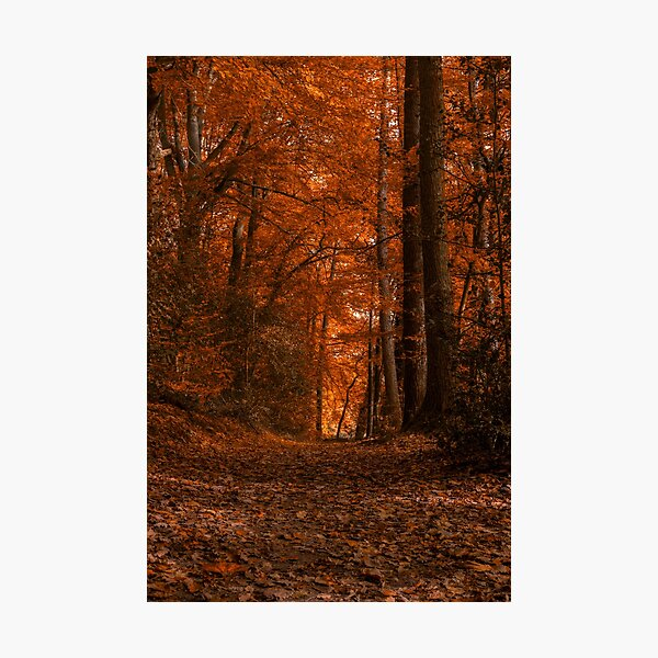 Warm Red Autumn colours Photographic Print