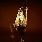 Tears by saseoche