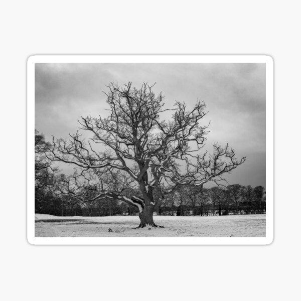 The Majestic Royal Oak of ireland Sticker