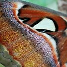 Butterflies have scales by Tracey Hampton