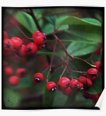 Red Berry Blur Poster