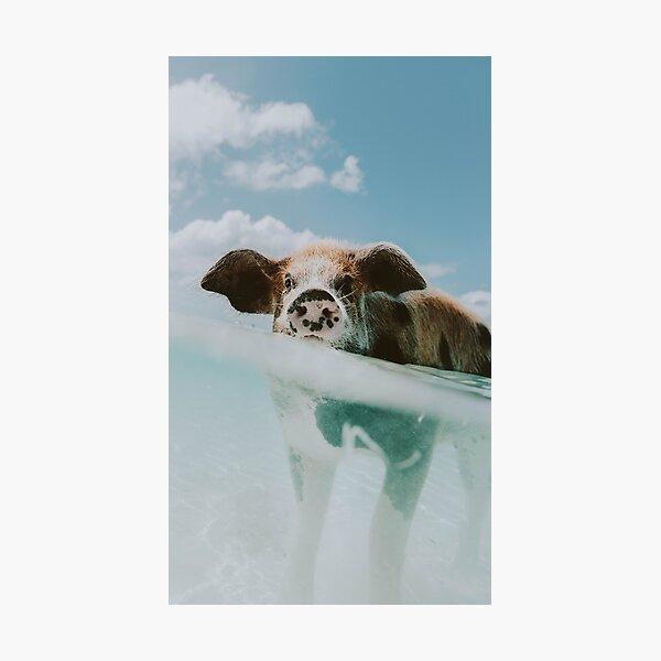 Let's Swim II Photographic Print