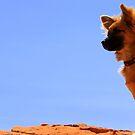 Doggie wonder by Scott Curti