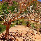 Tree of.... smallness? by Scott Curti