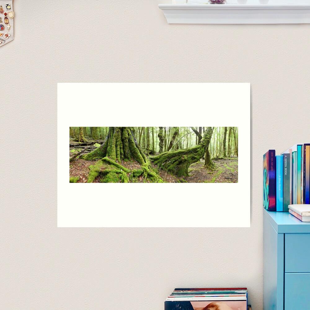 Mossy Myrtle Forest, Cradle Mountain, Tasmania Art Print