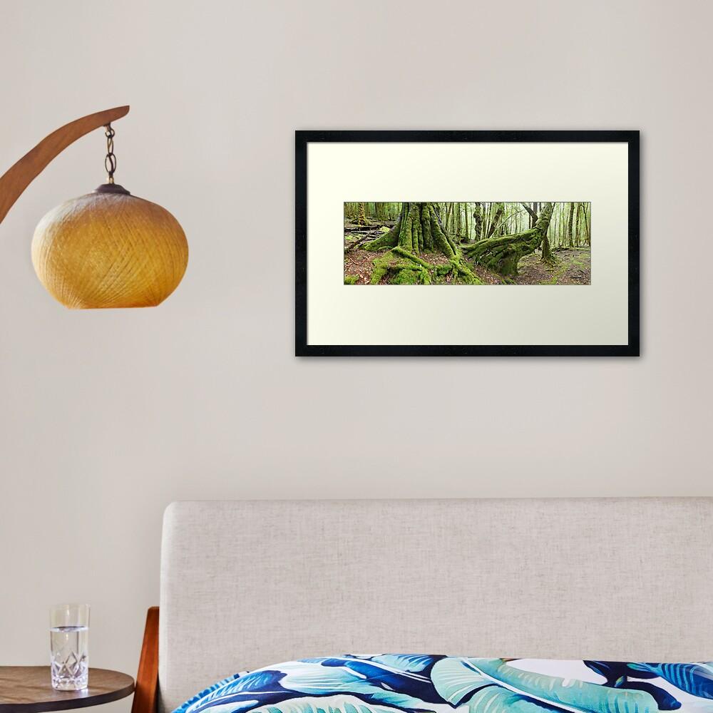 Mossy Myrtle Forest, Cradle Mountain, Tasmania Framed Art Print