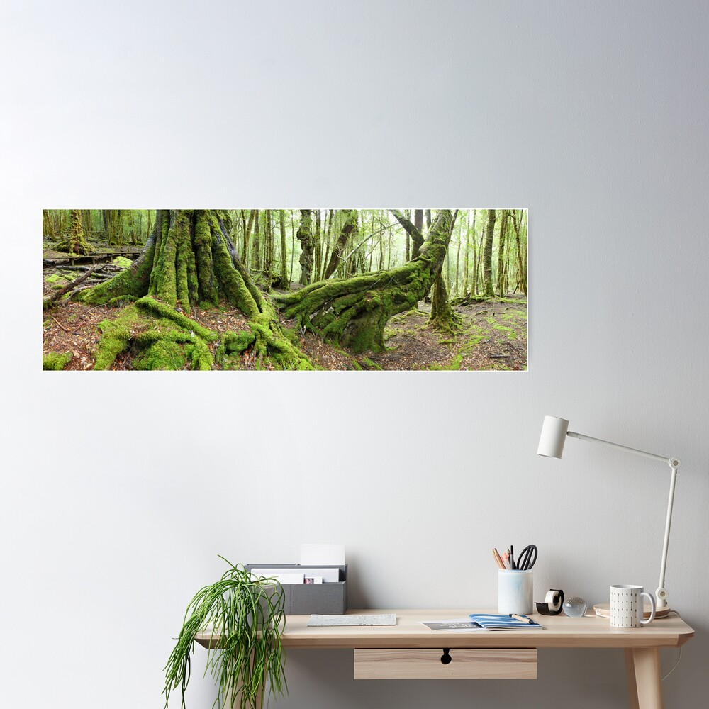 Mossy Myrtle Forest, Cradle Mountain, Tasmania Poster