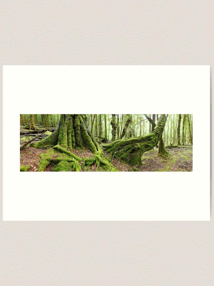 Alternate view of Mossy Myrtle Forest, Cradle Mountain, Tasmania Art Print