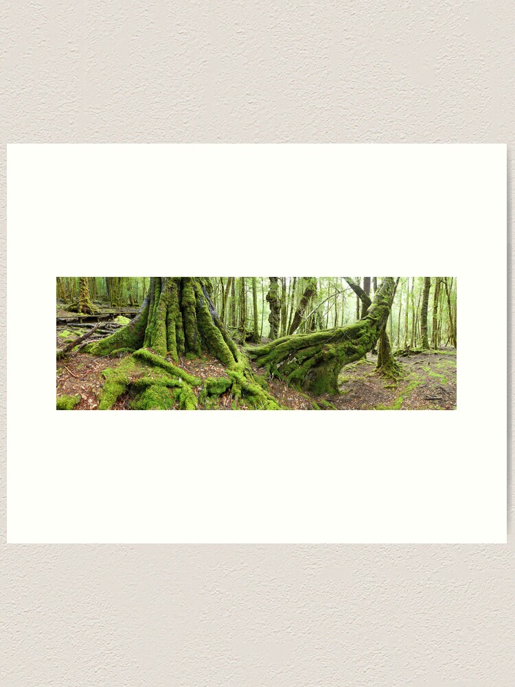 Alternate view of Mossy Myrtle Forest, Cradle Mountain, Tasmania Art Print
