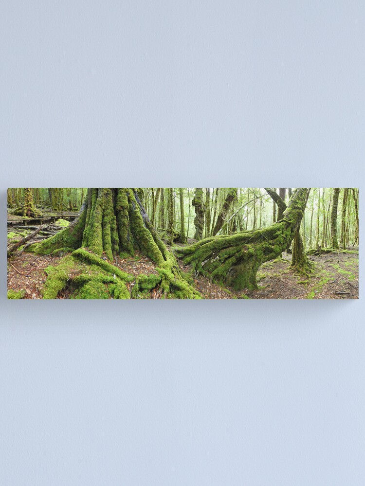 Alternate view of Mossy Myrtle Forest, Cradle Mountain, Tasmania Canvas Print