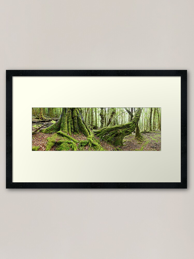 Alternate view of Mossy Myrtle Forest, Cradle Mountain, Tasmania Framed Art Print