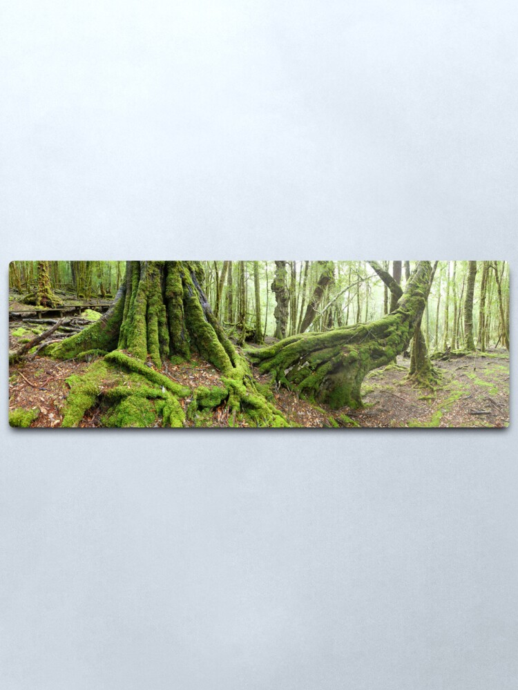Alternate view of Mossy Myrtle Forest, Cradle Mountain, Tasmania Metal Print