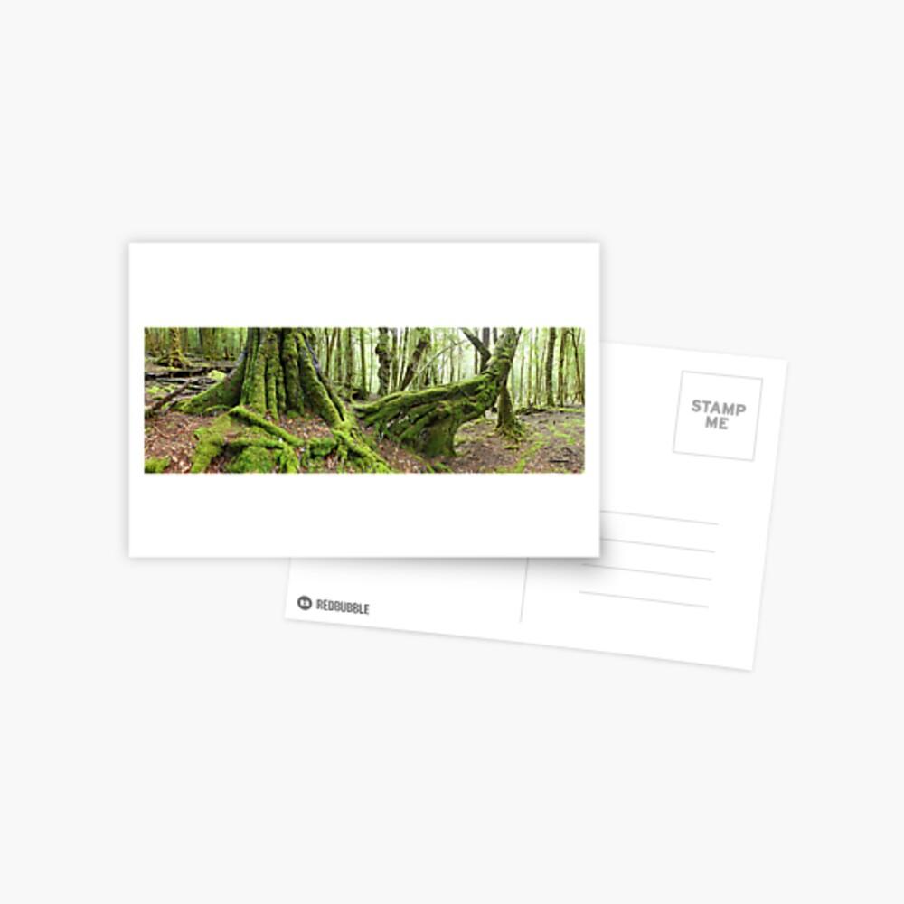 Mossy Myrtle Forest, Cradle Mountain, Tasmania Postcard