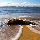 Sea Weeed by Patrick Reid