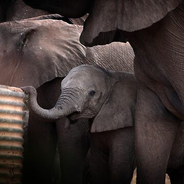 African Elephant Baby by HuskyRose1973