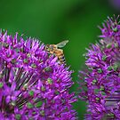 Twins With Bee by Robert Goulet